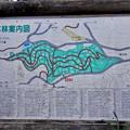Photos: 定光寺自然休養林:見本林案内図