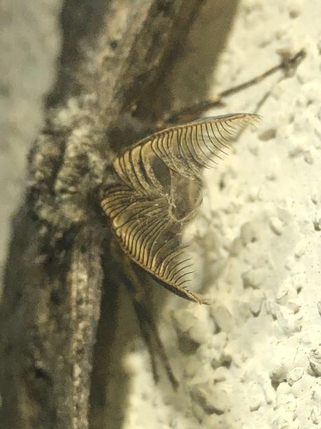 フサフサした蛾 - 4