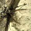 フサフサした蛾 - 7