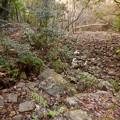 弥勒山:杉洞川の源流部 - 2