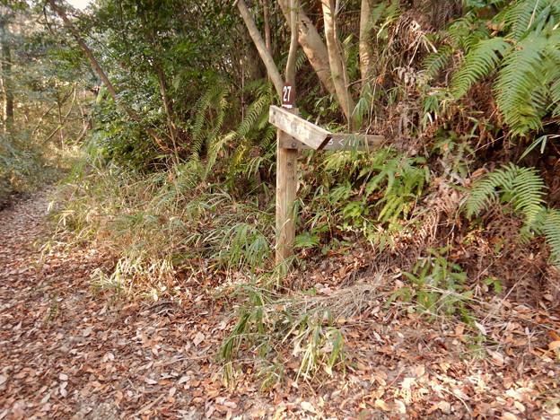 弥勒山の遊歩道 No.27 の分かれ道 - 2