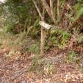 Photos: 弥勒山の遊歩道 No.27 の分かれ道 - 2