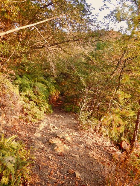 弥勒山の遊歩道 No.27~35の間にある眺めの良い場所 - 10