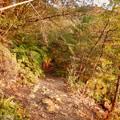 Photos: 弥勒山の遊歩道 No.27~35の間にある眺めの良い場所 - 10