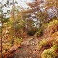 Photos: 弥勒山の遊歩道 No.27~35の間にある眺めの良い場所 - 11
