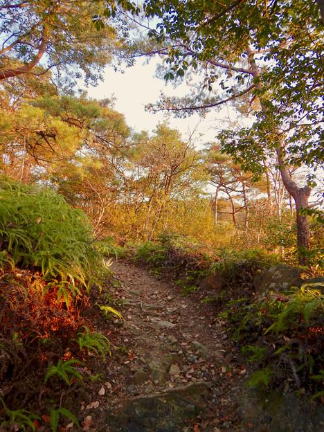 弥勒山の遊歩道 No.27~35の間にある眺めの良い場所 - 12