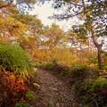 Photos: 弥勒山の遊歩道 No.27~35の間にある眺めの良い場所 - 12