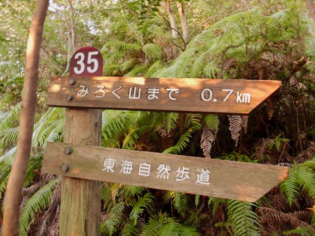 弥勒山の遊歩道 No.35 の分かれ道 - 4