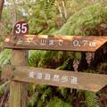 Photos: 弥勒山の遊歩道 No.35 の分かれ道 - 4