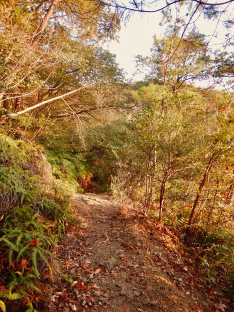 弥勒山の遊歩道 No.27~35の間にある眺めの良い場所 - 9