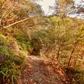 Photos: 弥勒山の遊歩道 No.27~35の間にある眺めの良い場所 - 9