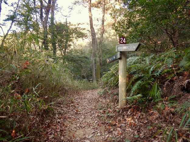 弥勒山の遊歩道 No.24 の分かれ道 - 2
