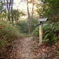 Photos: 弥勒山の遊歩道 No.24 の分かれ道 - 2