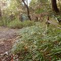 弥勒山の遊歩道 No.26 の分かれ道 - 1