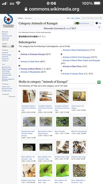 Wikimedia Commons:Animal of Kasugaiのページ - 2:スマホでDesktopビューで閲覧