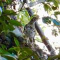 Photos: 西高森山にいた鳥(トラツグミ?) - 2
