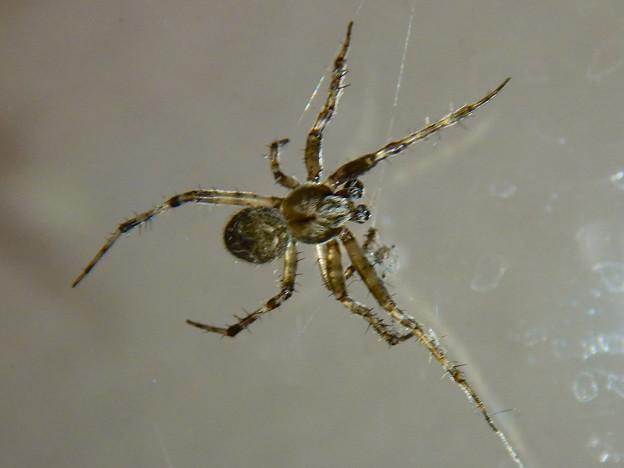 コンビニにいた蜘蛛 - 1