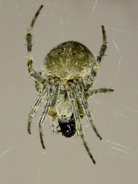 Photos: コンビニにいた蜘蛛 - 2
