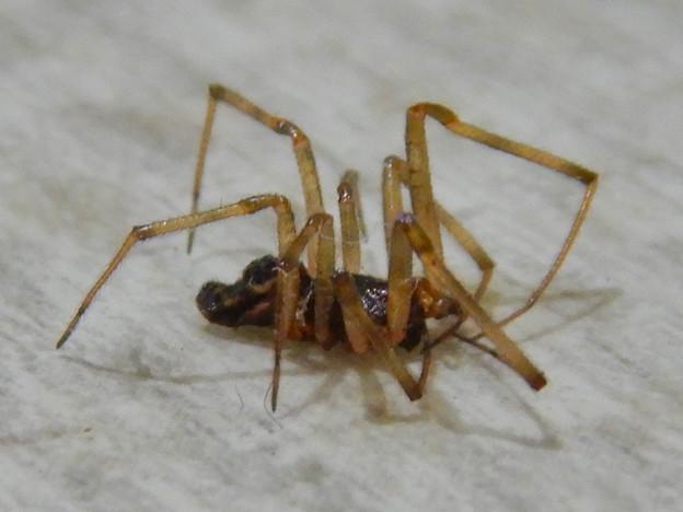商業施設のトイレにいた小さな蜘蛛