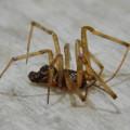 商業施設のお入れにいた小さな蜘蛛