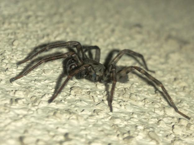 黒くてまだらな蜘蛛 - 7