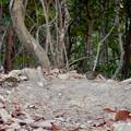 Photos: 弥勒山山頂にいたスズメみたいな鳥 - 9