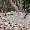 Photos: 弥勒山山頂にいたスズメみたいな鳥とヤマガラ
