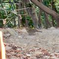 Photos: 弥勒山山頂にいたスズメみたいな鳥 - 1