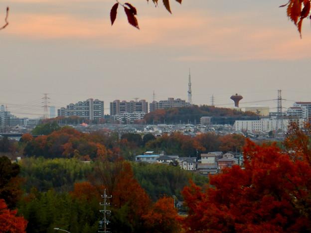 ふれあいの森から見た桃花台中央公園