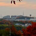 Photos: ふれあいの森から見た桃花台中央公園
