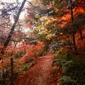 ふれあいの森の遊歩道沿いの紅葉した木々 - 1