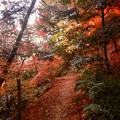 ふれあいの森の遊歩道沿いの紅葉した木々 - 2
