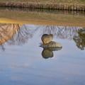 Photos: 落合公園の池にいたヌートリア - 1