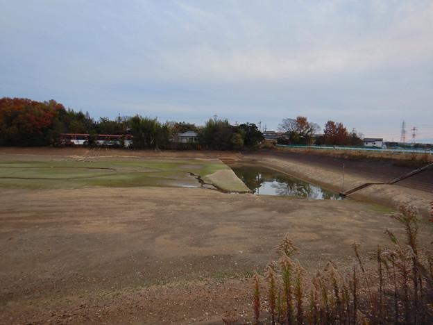 Photos: 水抜きされた茨池(南側) - 2