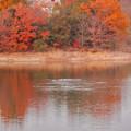 冬の鋏池 - 2:紅葉した木々とカモ