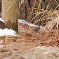 Photos: 秋ころから弥勒山山頂で見かけるようになった「クロジ」 - 1
