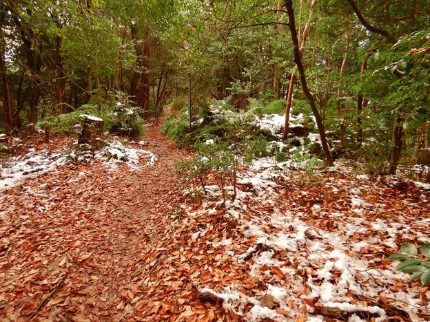 雪が残る弥勒山の遊歩道 - 1