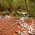 Photos: 雪が残る弥勒山の遊歩道 - 1