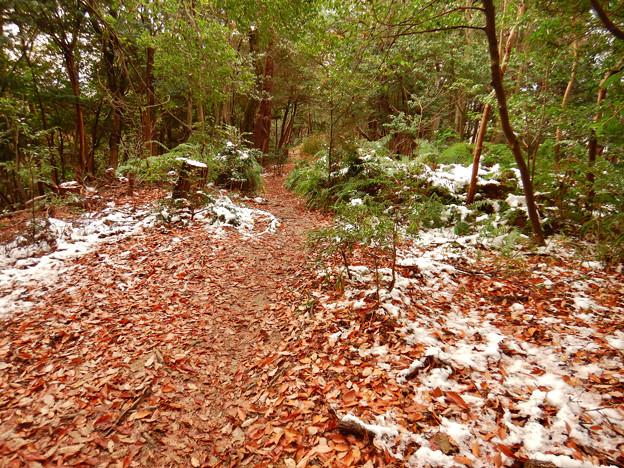 Photos: 雪が残る弥勒山の遊歩道 - 2