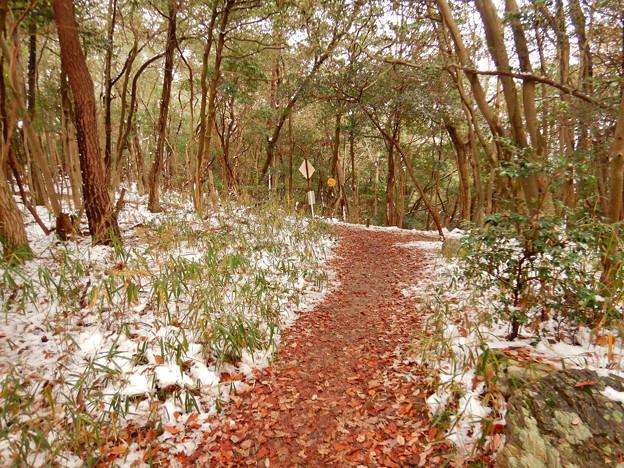 Photos: 雪が残る弥勒山の遊歩道 - 3