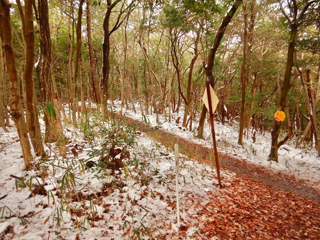 雪が残る弥勒山の遊歩道 - 4
