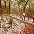 Photos: 雪が残る弥勒山の遊歩道 - 4
