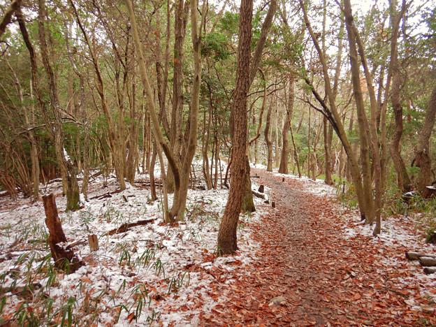 雪が残る弥勒山の遊歩道 - 5