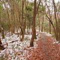 Photos: 雪が残る弥勒山の遊歩道 - 5