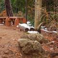 Photos: 雪が残る弥勒山山頂