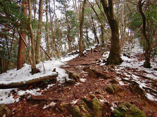 雪が残る弥勒山の遊歩道 - 6