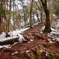 Photos: 雪が残る弥勒山の遊歩道 - 6