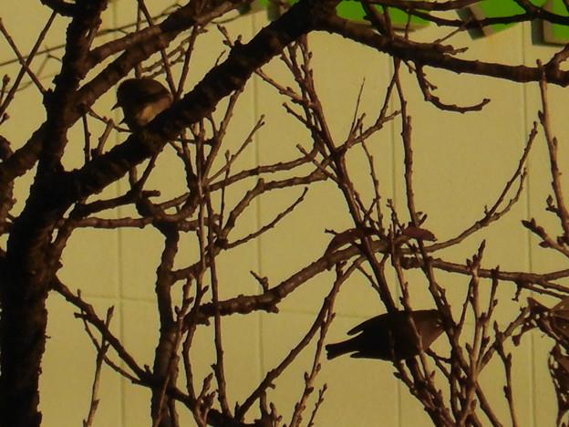 尾張広域緑道の木々を移動していたメジロ - 5
