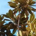 Photos: 尾張広域緑道の木々を移動していたメジロ - 3