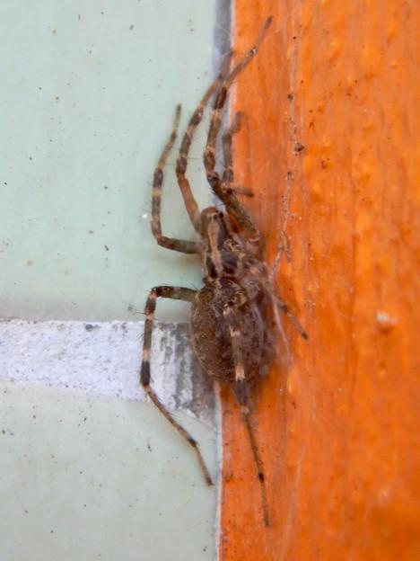 寒そうに隅っこでうずくまってた?蜘蛛 - 2